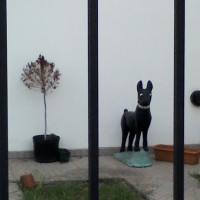 Planta y perro, dos muertitos 2.. marzo 2012