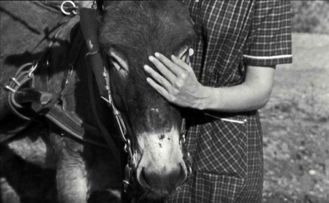 """Al azar Balthazar"" (1966), de Robert Bresson. (de La Audacia de Aquiles WordPress)"